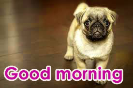 Very Sweet Good Morning Images Photo Wallpaper HD Download