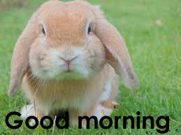 Very Sweet Good Morning Images Pictures Free Download