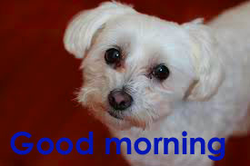 Very Sweet Good Morning Images Photo Pictures Free Download