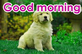 Very Sweet Good Morning Images Photo Download