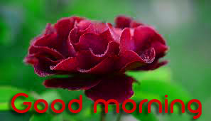 3d Good Morning Images Photo Wallpaper With Flower