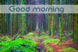 3d Good Morning Images Wallpaper Photo HD For Whatsaap