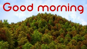3d Good Morning Images Photo Wallpaper