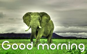 3d Good Morning Images Photo Wallpaper Pics