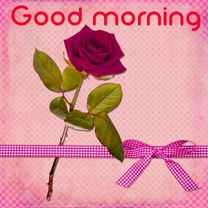 3d Good Morning Images Photo Pics With Red Rose