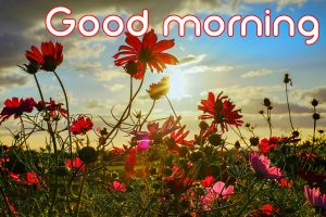 3d Good Morning Images Wallpaper pics With Flower