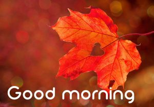 3d Good Morning Images Pictures Wallpaper Download